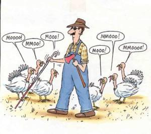 turkey_day